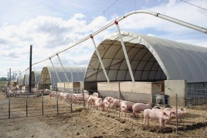 Pure County Pork - Healthy Hog Housing 2