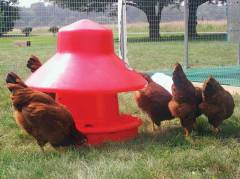 Chick-Inn Poultry Feeder