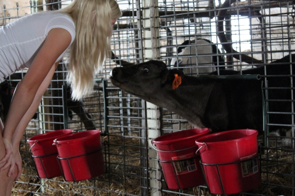 Feeding Buckets & Double Bucket Hangers