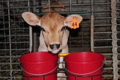 Feeding Buckets & Double Bucket Hangers 1