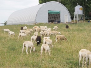 Sheep Farm Livestock Housing 1