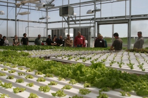 Visiting the hydroponic lettuce demonstration area