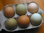 Different sized eggs