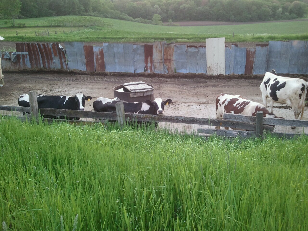 cow tales from the dairy farm u2013 hay how u0027s your season going