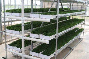 The Fodder-Pro Feed System