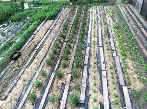 Southtown Farms vegetable plot