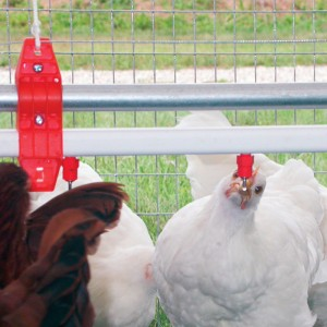 Poultry drinker kit