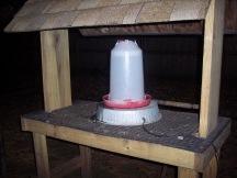 Chicken waterer with heated platform