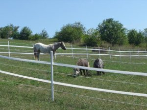 Horse Fence Strapping