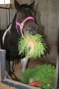 Feeding fodder to horses will optimize their general health and performance