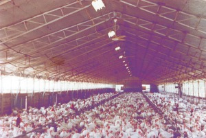 TekFoil in poultry barn