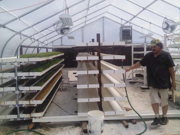 Fodder system in greenhouse