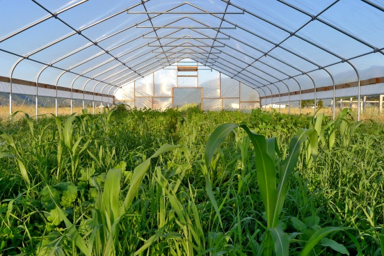 Gothic Cold Frame and Greenhouse Film