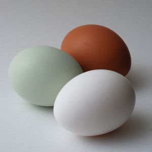 Araucana egg comparison