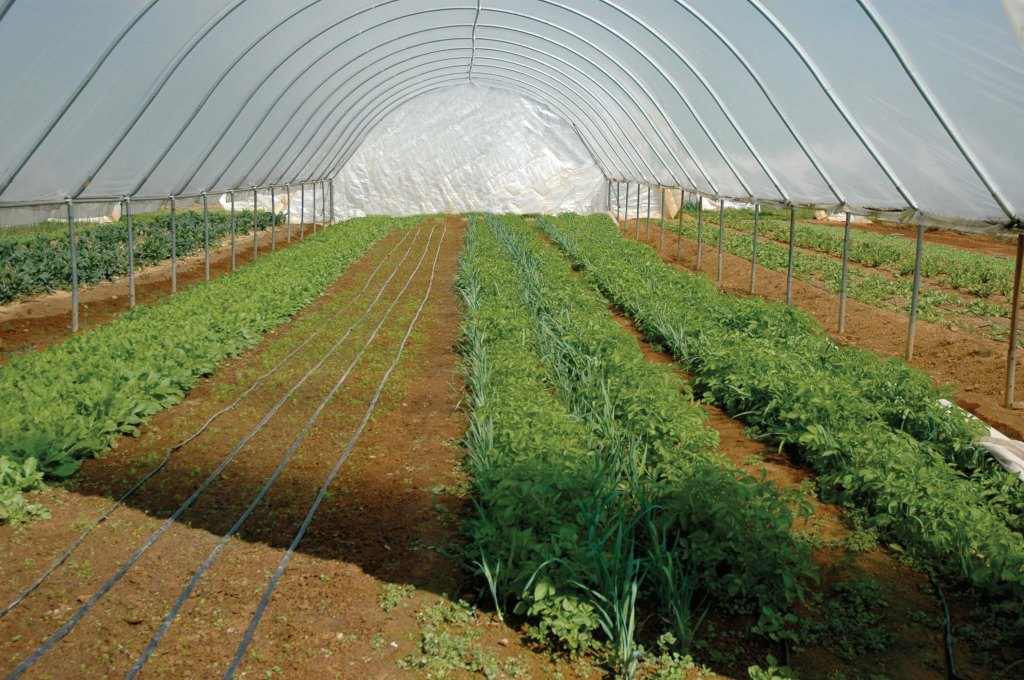High Tunnel Irrigation
