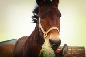 Horse fodder