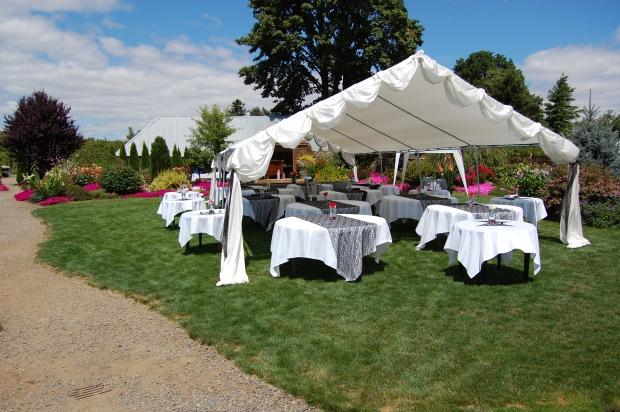 Wedding canopy 2