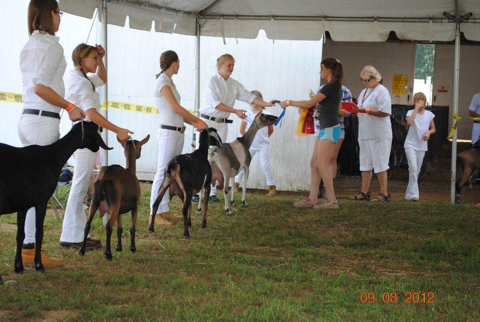 4-H Goat Show