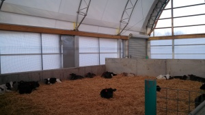 Calf housing in a ClearSpan Fabric Structure