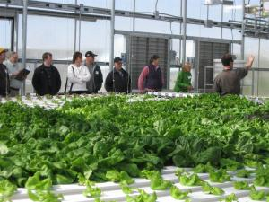 Hands-on hydroponic greenhouse tour