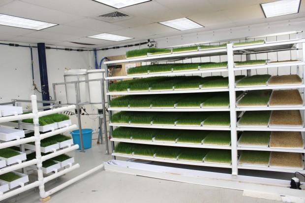 Fodder Growing Room