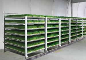 Commercial Fodder System