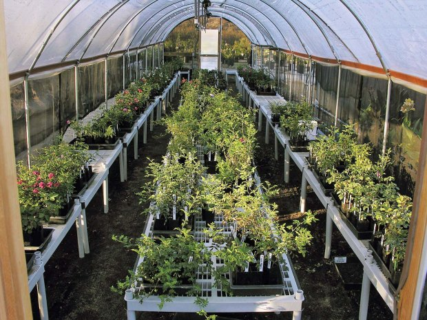 Growth Potential in High Tunnels