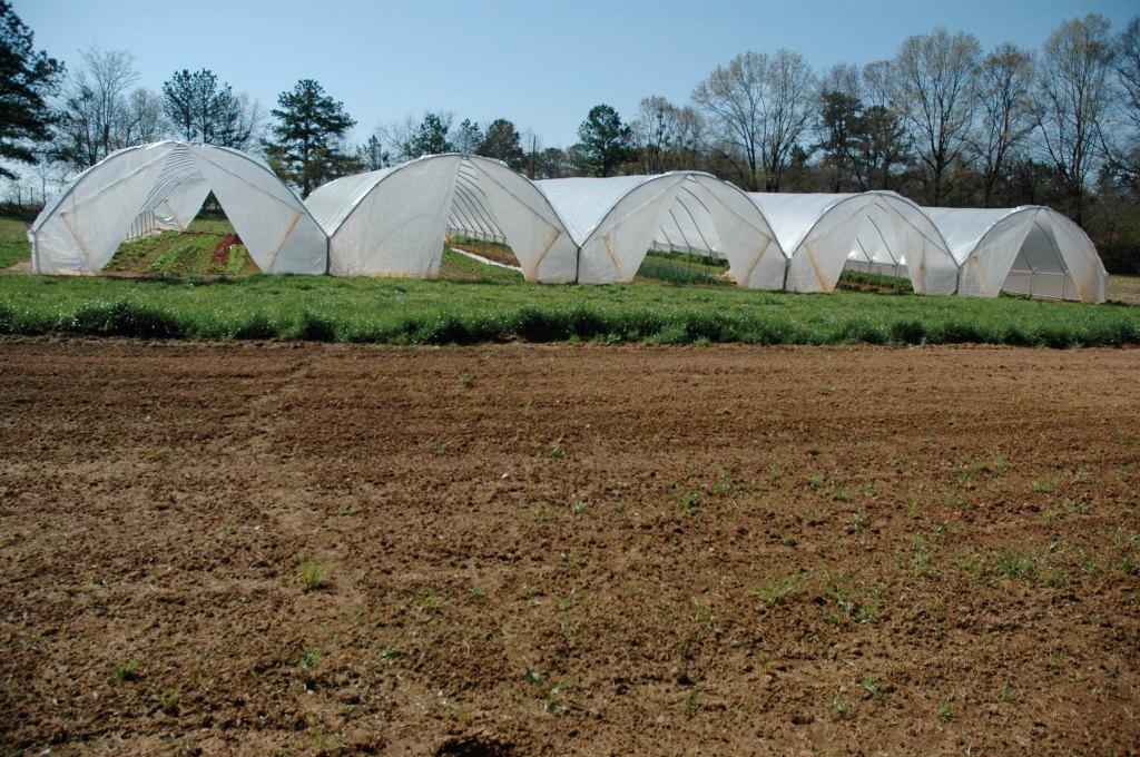 High Tunnel Farming