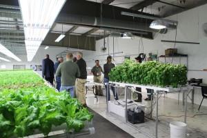 Lettuce Growing Room Technology Center East Tour