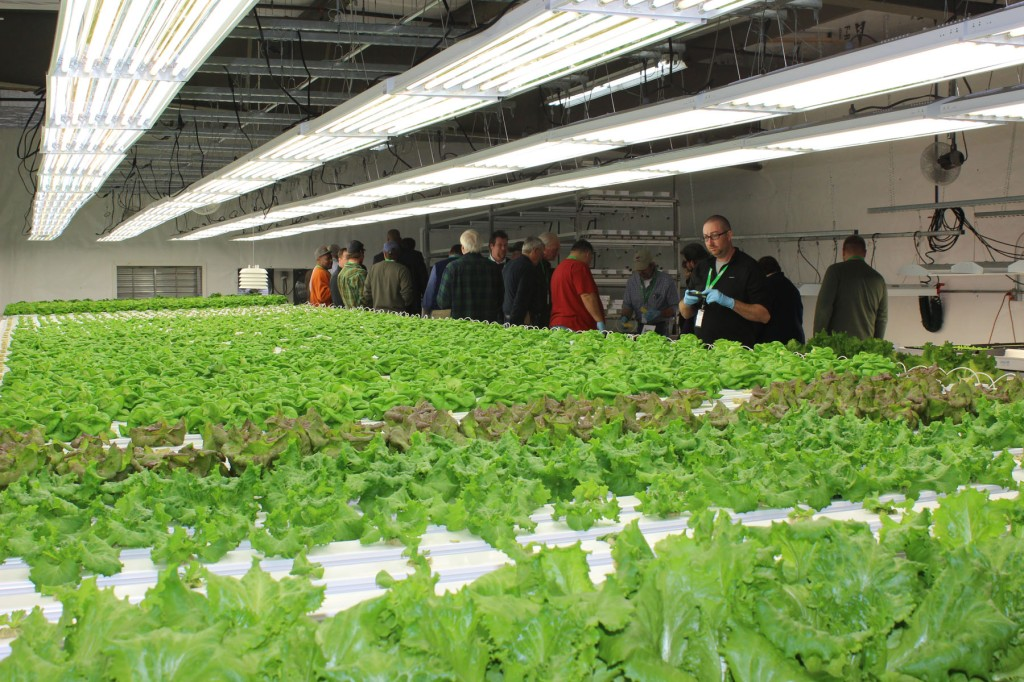 Technology Center East Lettuce Growing Controlled Environment