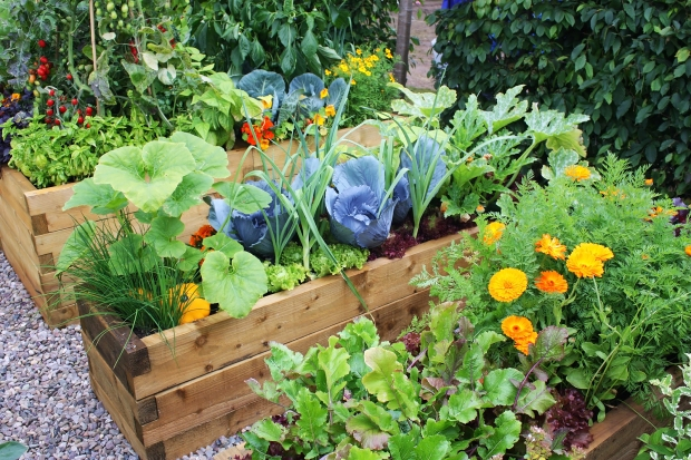 Blooming Vegetable Garden