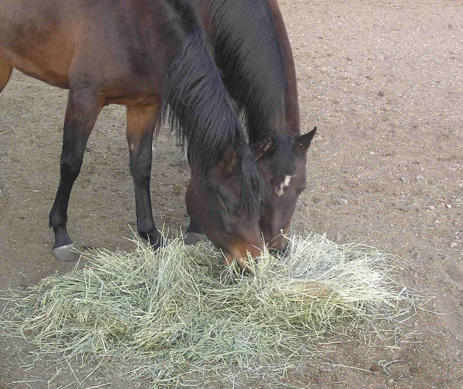 Selecting Hay For Livestock Farmtek Blog