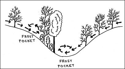 Diagram of frostpocket