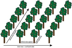 Planning tree spacing