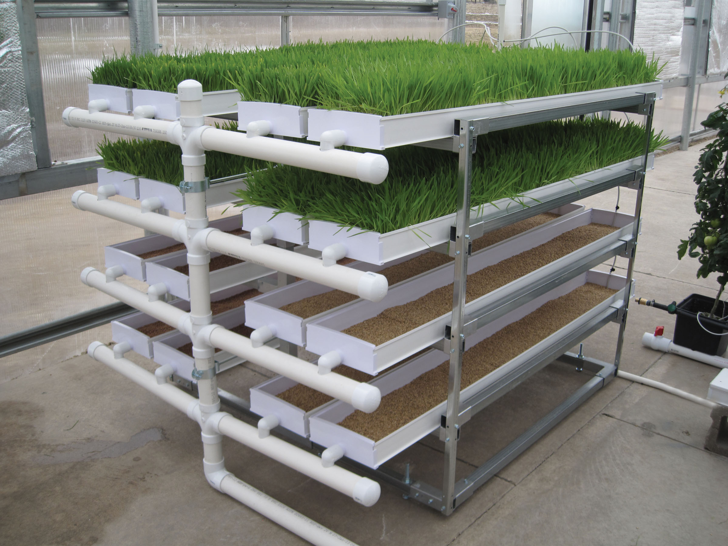 hydroponic fodder production farmtek blog. Black Bedroom Furniture Sets. Home Design Ideas