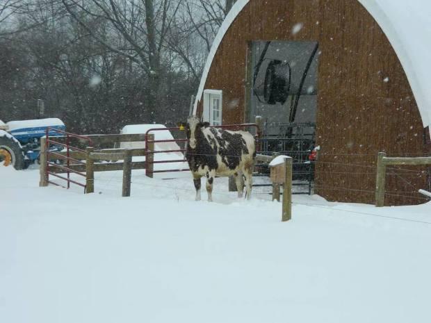 Amanda Shedd Kennedy - Best winter photo