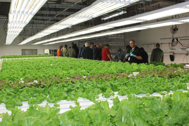 Hydroponic Lettuce Room