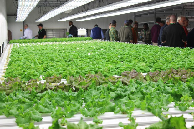 Hydroponic Lettuce at FarmTek