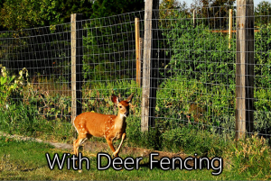 With Deer Fencing