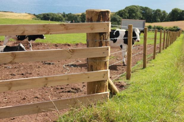 Livestock Fencing