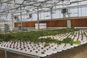 Hydroponic Greenhouse