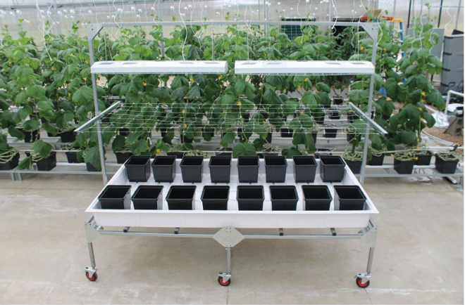 Rolling Bench with Propagation Tray