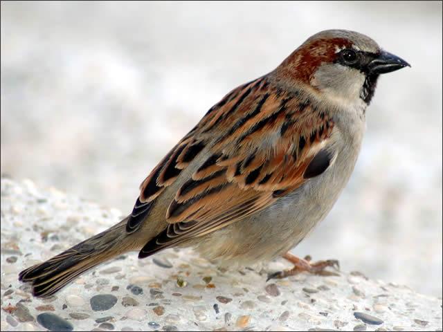 dealing with barn birds farmtek blogsparrow