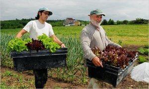 Working Farmers