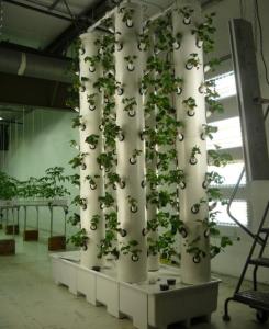 aeroponics 2